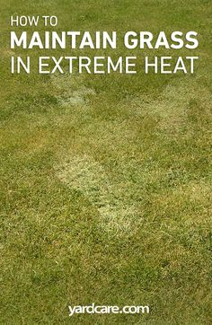 How to Maintain Grass in Extreme Heat Green Lawn, Green Garden, Lawn And Garden, Reseeding Lawn, Lawn Care Tips, Lawn Maintenance, Yard Care, Extreme Heat, Courtyards