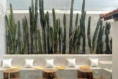 Cafe Shop Design, Cafe Interior Design, Open Air Restaurant, Pop Up Bar, Surf Lodge, Garden Table, Hanging Plants, Architecture, Decoration