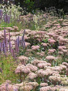 Piet Oudolf | Agastache foeniculum, Sedum X 'Matrona', Eryngium yuccifolium
