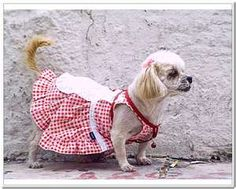 Image detail for -Dog Coats Patterns Dog Clothes Ideas 2011 – Daily Knitting Patterns