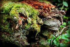 Tree, Stump, Moss, Wood, HD, Macro, Nature, Parksville, BC, British Columbia, Canada
