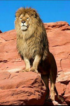 THE KING - Arif Hussain - Google+