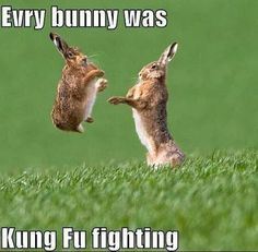 You know the song everybody was kung fu fighting? Well know every BUNNY was kung fu fighting! Humor Animal, Funny Animal Memes, Animal Quotes, Cute Funny Animals, Funny Animal Pictures, Funny Cute, The Funny, Funny Memes, Funny Pics