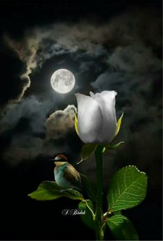 Good night my beautiful, hold on incredible comes to mind as well. Oh adorable blends well with fucking awesome and just perfection. Good my Star never a moment goes by. Good night my dearest and rarest beauty in he universe. Moon Pictures, Pretty Pictures, Beautiful Moon, Beautiful Roses, Shoot The Moon, Special Images, Moon Lovers, Moon Goddess, Moon Art