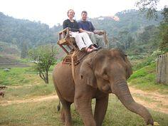 I want to ride an elephant... have I mentioned I LOVE elephants?!