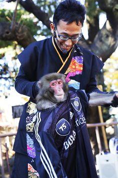 浅草 浅草神社 猿回し (Monkey showman, Asakusa Shrine)