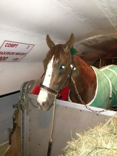 California Chrome this morning, April 28th boarded plane at LAX for Kentucky Derby.