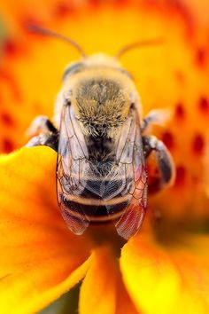 Bees, I am allergic to them, but they are beautiful.