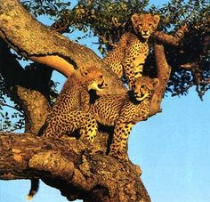An African safari, I want to see all Africa's amazing animals in the wild
