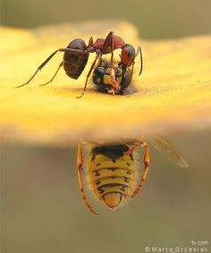 Hard work... and and yellow wasp - Marta Grzesiak
