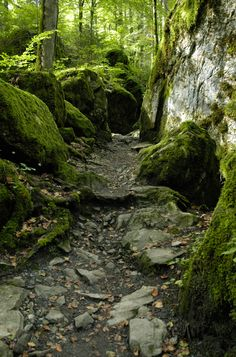 mossy forest trail