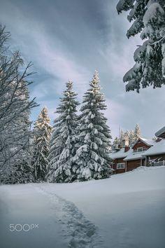 Kuopio winter - beautiful cold winter day in Kuopio, Finland , snow landscape