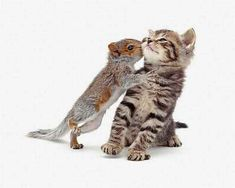 Over-Friendly Squirrel Kisses | The 25 Cutest Animal Kisses