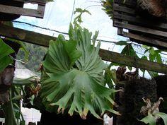 Explore PlatyceriumTatsuta's photos on Flickr. PlatyceriumTatsuta has uploaded 768 photos to Flickr.