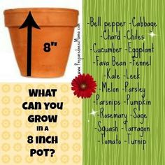 What Can You Grow in an 8-Inch Pot? | #gardening #container