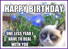 Birthday Meme with a Cat: Happy Birthday! One less year I have to deal with you!