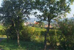 Waldviertel Dog Walking, Country Roads, Plants, Photography, Woodland Forest, Photograph, Fotografie, Photoshoot, Plant