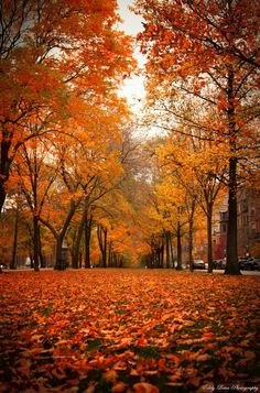 Commonwealth Avenue, Boston; photo by .MyLifeThroughTheLens