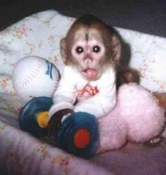 Best I Love Monkeys Images On Pinterest In  Paintings Cartoon Monkey And Cute Pets