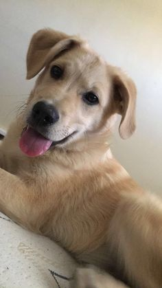 Getting older    http://ift.tt/2mrkoxK via /r/dogpictures http://ift.tt/2mbuOkq  #lovabledogsaroundtheworld