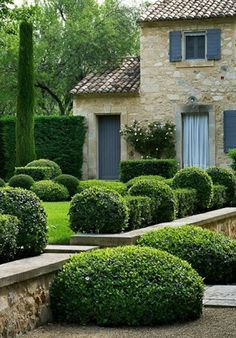 Evergreen boxwood hedging with espalier rose.
