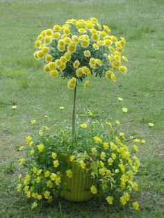 ボンザマーガレットのスタンダード仕立て Beautiful Flowers Garden, Beautiful Gardens, Plant Design, Garden Planning, Container Gardening, Flower Arrangements, Diy And Crafts, Fruit, Green