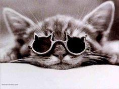 chats mignons - Recherche Google