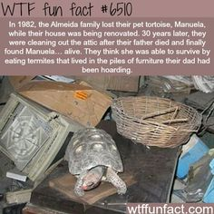 30 YEARS? ...in a HOT Summer attic, & cold Winters?  Have fun cleaning 30 year's worth of Tortoise  Turd!  ~WTF? not-a-fun fact!