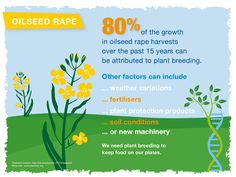 80% of the growth in #oilseed rape harvests over the past 15 years can be attributed to #PlantBreedingEU.