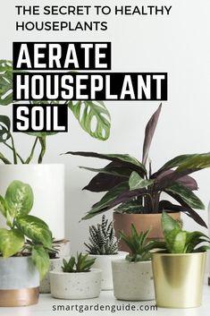 Indoor Plant Pots, Indoor Gardening, Container Gardening, Garden Plants Vegetable, Pot Plants, Garden Guide, Garden Ideas, Smart Garden, Inside Plants