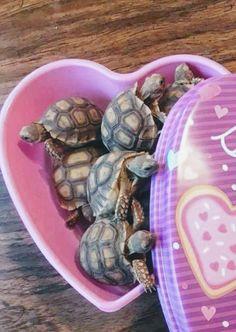 Small Turtles, Tortoises, Sea, Animals, Turtles, Animales, Tortoise, Animaux, The Ocean