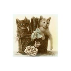 Sweet Sage Vintage ❤ liked on Polyvore featuring cats, animals, animaux and backgrounds