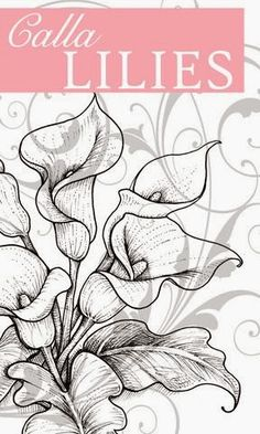 Stamp Happy: Flourishes New Release - Calla Lilies///Pattern. Colouring Pages, Coloring Books, Lilies Drawing, Lilly Flower Drawing, Doodle Drawing, Flower Sketches, Calla Lillies, Motif Floral, Painting Patterns