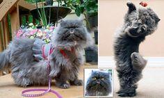 'Ugly' cat becomes internet sensation