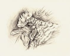 Featured on Poetic Poultry Group! http://fineartamerica.com/groups/poetic-poultry-.html?tab=overview