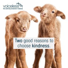 why finance animal cruelty? two good reasons to choose kindness #vegan