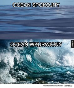 ocean Haha Funny, Lol, Polish Memes, Best Memes Ever, Funny Mems, Reaction Pictures, Funny Photos, Kuroko, Ocean