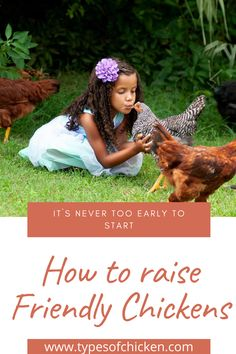 After getting your baby chicks, or after hatching – they will be very afraid and confused about everything around them.
