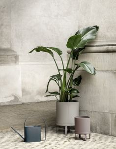 Ferm Living Bau Pot Warm Grey Large Adding plants anywhere in the home or outside is great for enriching our health as well as the environment and decor. Bau pots have been inspired by the aesthetic of Bauhaus architecture of uncluttered lines Nordic Design, Scandinavian Design, Architecture Bauhaus, Decoration Plante, Design Bestseller, Steel House, Kew Gardens, Blog Deco, Warm Grey