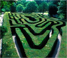 The maze (constructed in at Hampton Court, Richmond, England. I remember finding my way through this when I was a kid visiting my relatives in England. Amazing Maze, Richmond Upon Thames, Destinations, Hampton Court, England And Scotland, Public Garden, Hedges, Surrey, Garden Design