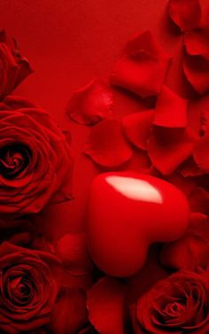Red heart and petals.  For similar pins please follow me at - https://www.pinterest.com/annelouise1959/colour-me-red/