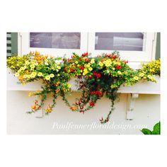 How cute is this window box?!  #paulfennerpics #windowbox #flowerstagram #flowers