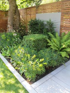 Evergreen structure in a shady bed. Box cube. Euphorbia. Ferns. Yew.