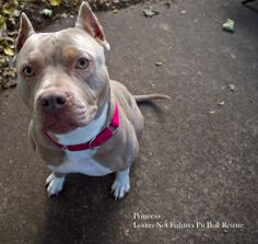 Princess is striking beauty.  Adopt her in Portland, OR