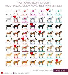 Choose the color of your equipment - emma chavanne - - Bien choisir la couleur de son équipement What carpet color for my horse? Horse Riding Tips, Horse Tips, My Horse, Equestrian Shop, Equestrian Outfits, Horse Facts, Horse Fashion, Horse Care, Horse Breeds