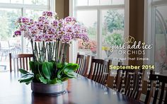 Discover beautiful orchids, simple orchid care tips, and design inspirations from Just Add Ice Orchids.