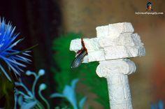 Fond ecran guppy poisson eau chaude et aquarium