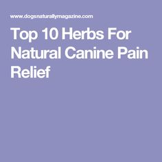 Top 10 Herbs For Natural Canine Pain Relief