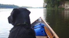 Adventures with Fido: How to Camp with Your Dog ^