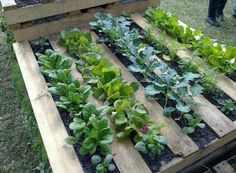 This year, we recommend you to try pallet gardening for growing your vegetables. You will need a wood pallet, several seeds, and some good-quality soil. A raised bed pallet garden can be built in several ways. You will finish it in a few days, and there is no need to invest much money. We will ...